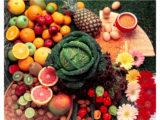 illustration-vegetale